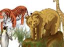Мир загадок: Животные